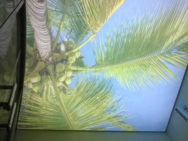 Опънат таван в баня с принт палма Бургас ж.к. Славейков